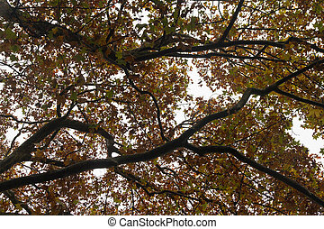 beautiful autumn tree branches