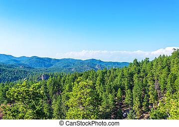 Black Hills National Forest in South Dakota