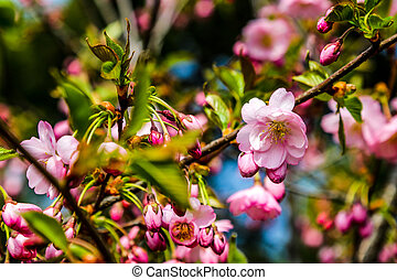 View of the blooming apple and cherry trees in the garden in spring. Nature background, the beginning of life, sunny day.