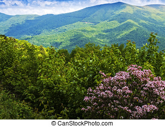 View of the Blue Ridge Mountains - Scenic view of the Blue...