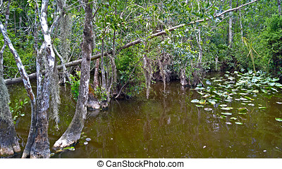 View of the bush in wetlands and water under blue sky in the Everglades in Florida, USA