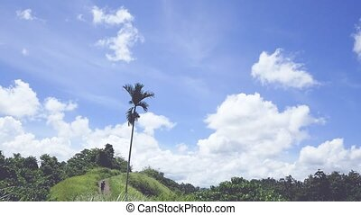 View of the Campuhan Ridge Walk, Green Hill, Palm Tree and...