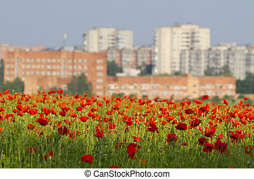View of the city from a poppy field