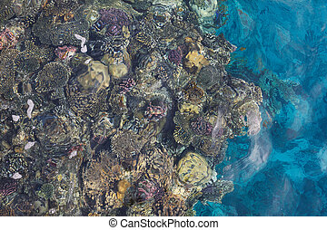 View of the coral reef with fish in the Red Sea through the water. Top view, copy space, flat lay