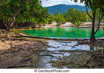 view of the emerald lake in Krabi, Thailand, no people