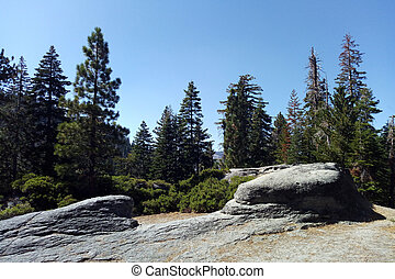 View of the forest in Yosemite Park on a sunny day.