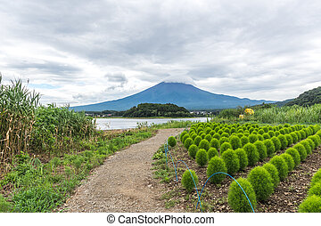 View of the Fuji mountain from the shore under the cloudy sky amid the lawn with flowers. Japan