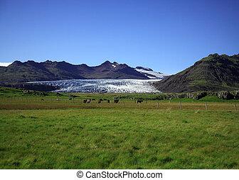 View of the glacier
