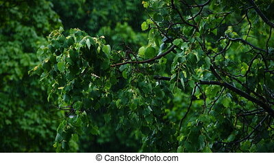 View of the green leaves of the trees in the rain - Slow...