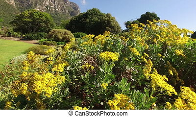 Kirstenbosch botanical gardens - View of the Kirstenbosch...