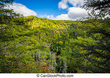 View of the Linville Gorge near Linville Falls, along the...