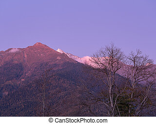 View of the mountain tops of the forest of bare trees and blue sky