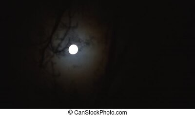 View of the night sky with the moon through the trees