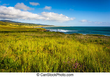 View of the Pacific Coast in Pescadero, California.