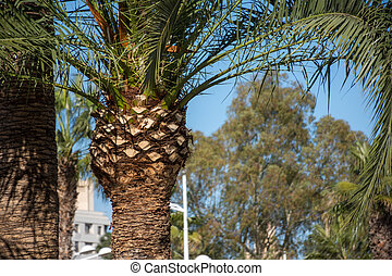 View of the palm tree