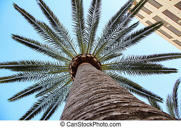 View of the palm trees from below
