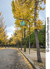 view of the park with yellow ginkgo in Japan