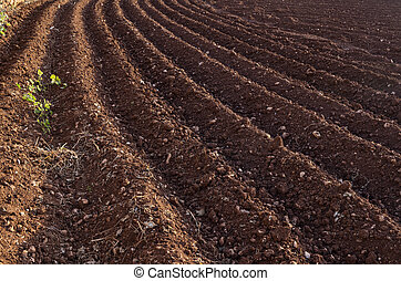View of the plowed land. Furrows from the plow. Agriculture