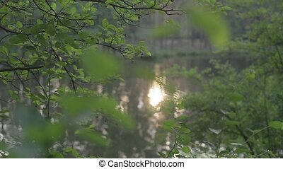 View of the river through the green leaves