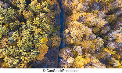 View of the road at forest with trees covered yellow foliage
