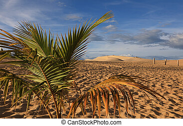 View of the sand dunes