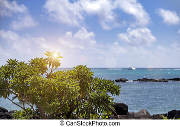 view of the sea through a green tropical bush on Mauritius