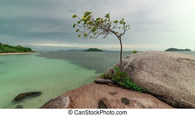 View of the seascape and a growing tree on the rocks. Timelapse 4K
