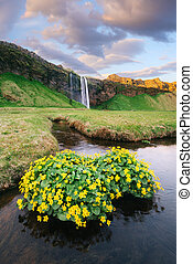 View of the Seljalandsfoss waterfall, Iceland