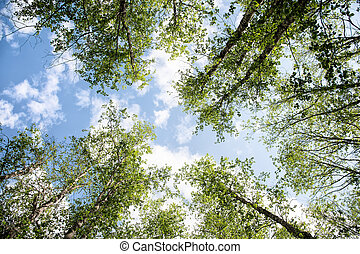 View of the sky in the Caucasus forest