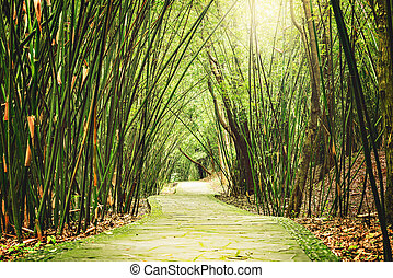 View of the small jungle road. - View of the small road in...