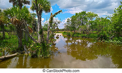 View of the steppe and wetlands are vultures among palm trees on the sand under a blue sky on the Everglades in Florida, USA