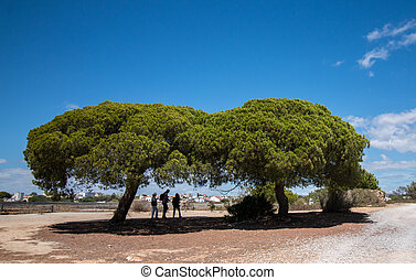View of the stone pine tree (pinus pinea) over a blue sky.