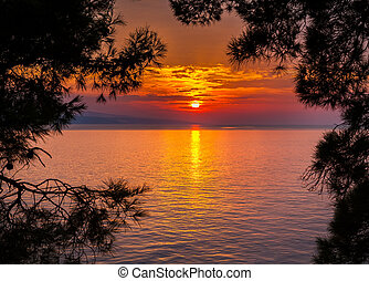 sunset through pine trees
