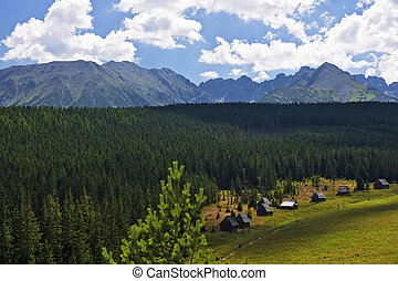 View of the valley Olczyska in the Polish Tatras