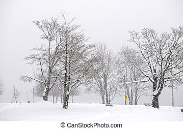 View of Transfer Beach park during a winter storm in Ladysmith, BC