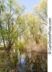 View of trees close to the Dnieper river in spring