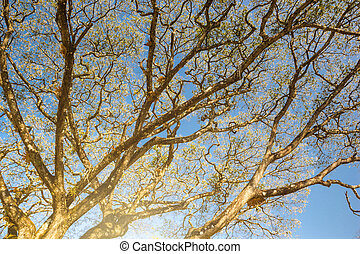view of treetops. Background autumn - branches of a tree in autumn with blue sky landscape.
