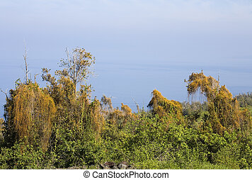 View of tropical forest and the Pacific Ocean in the South Kona District, Big Island, Hawaii.