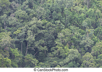 view of tropical forest