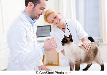 Two attractives veterinary surgeons examine a cat - View of...