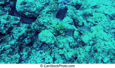 View of underwater world. Seabed, close-up