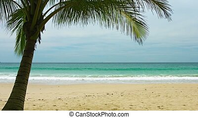 View of uninhabited sandy beach with palm tree