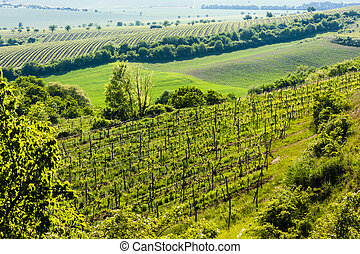 view of vineyard Jecmeniste, Znojmo Region, Czech Republic
