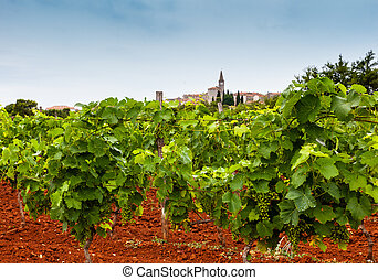 View of vineyards in the Istrian countryside - View of ...