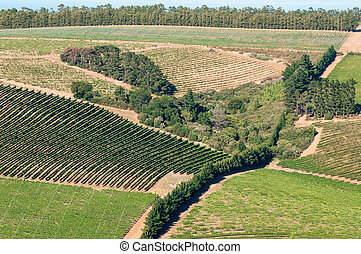 View of vineyards near Somerset West, South Africa
