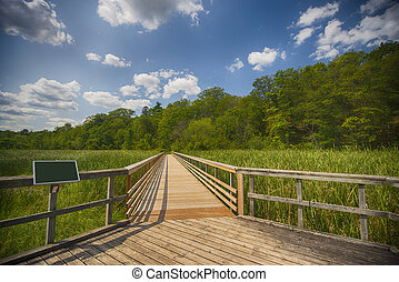 View of walkway in marshland landscape