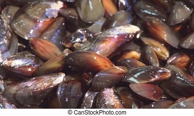 View of washed cleaned polished mussels in colander. Restaurant kitchen. Preparing for cooking