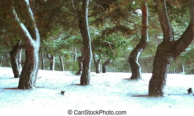Winter forest in the snow
