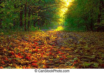 View on autumn landscape of trees in sunny day