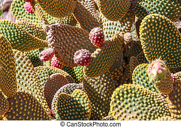 View on cactus plants in Argentina - View on cactus plants ...